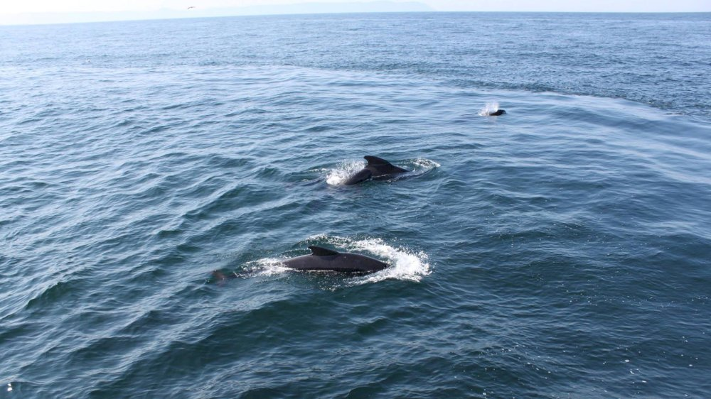 Ingonish Whalewatching Tours